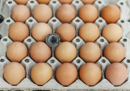 Eggs in the egg-tray photo
