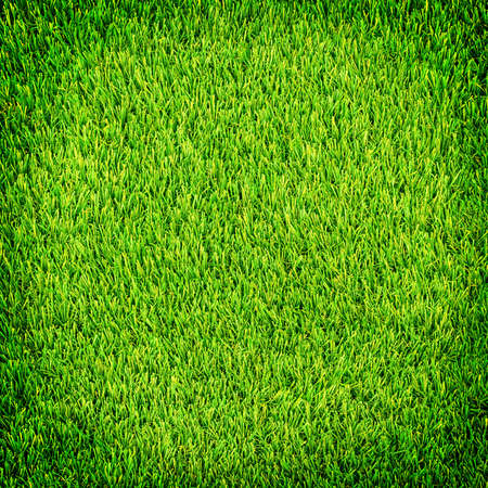 indoor background: Artificial grass sport field background with shadow frame