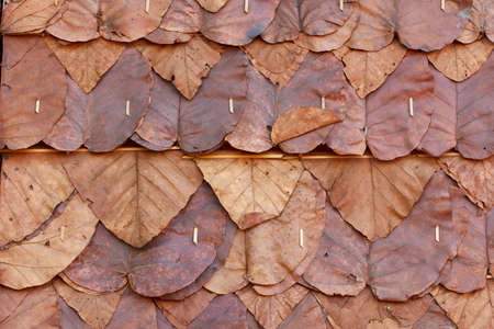 ton: Brown leaf wall background, Ton Tueng wall background,