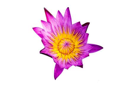 Lotus rose sous le soleil du matin Banque d'images - 47867604