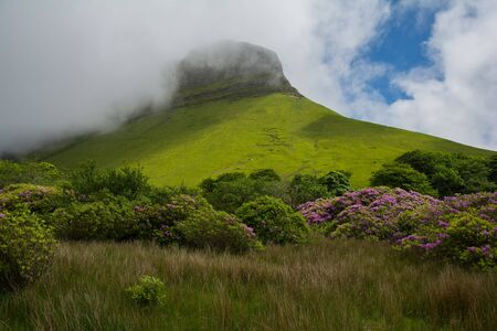 Ben bulben, Republic of Ireland on a partly sunny day with rhododendron in the foreground, Sligo