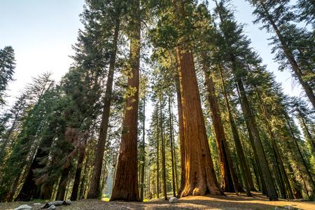 sequoia: Sequoia National Park