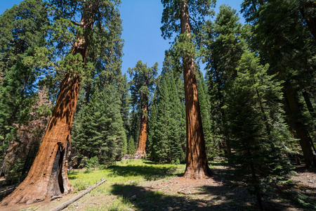 sequoia national park: Sequoia National Park