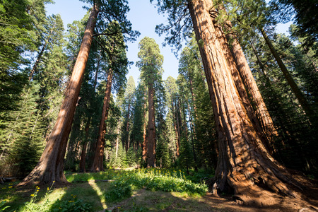 kings canyon national park: Sequoia National Park