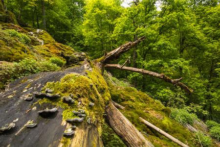 Uracher Cascades, Bad Urach, Allemagne sur une journée nuageuse