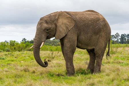 Knysna Elephant Sanctuary in South Africa