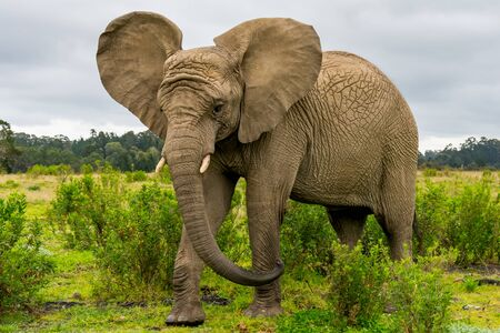 Knysna Elephant Sanctuary in South Africa