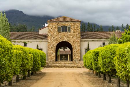 grape vines: Stellenbosch wine region close to Cape Town in South Africa