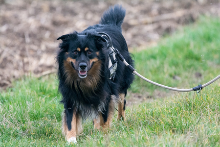 companions: Dog walking and playing in nature