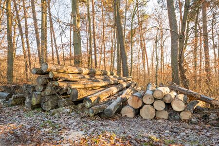 Wood stacks in the forrest in Winter, Germany Stock Photo