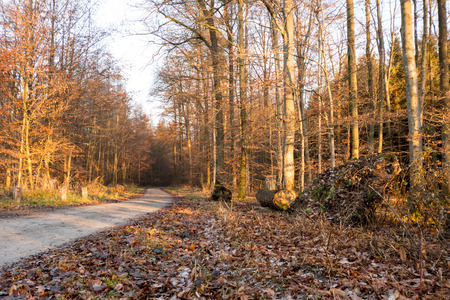 Forrest path with sun at the peaks of the tees in winter, Germany Stock Photo