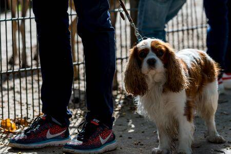 飼い主の浸出の上の犬 写真素材