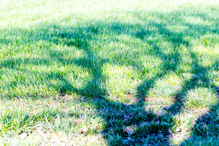 Shadow of a tree without leaves on a green background Reklamní fotografie