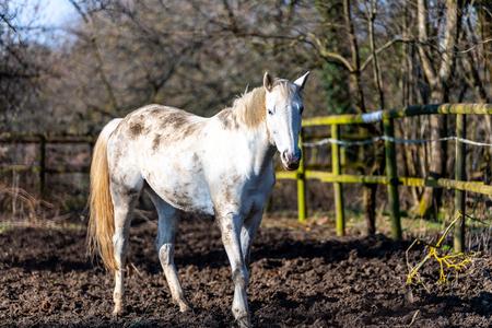 white horse standing on a paddock Reklamní fotografie