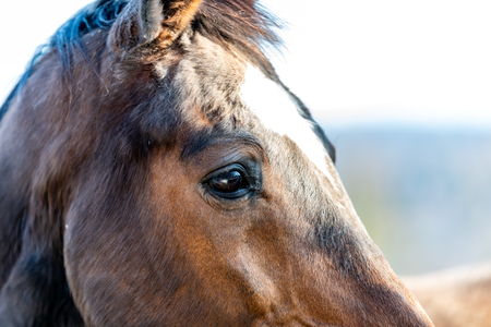 Brown horse standing on a paddock Reklamní fotografie - 107712263