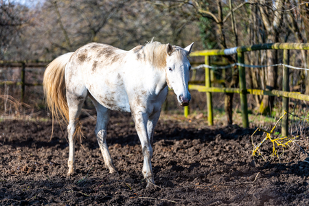 white horse standing on a paddock Stock fotó