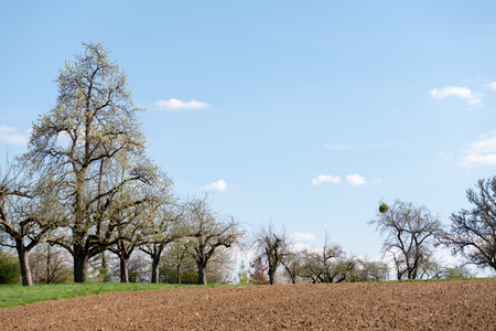 Bare field after agricultural treatment