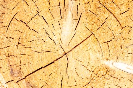 Detail of a very old tree Reklamní fotografie - 107712942