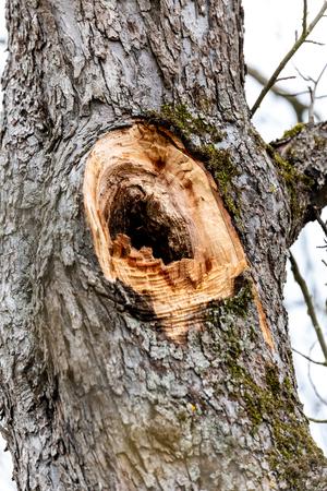 Whole in a tree for nestin animals Reklamní fotografie - 107712955