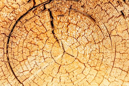 Detail of a very old tree Reklamní fotografie - 107713264