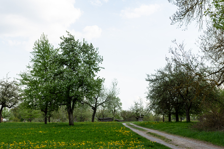 meadow orchards in the late spring time in Germany Reklamní fotografie - 107716307