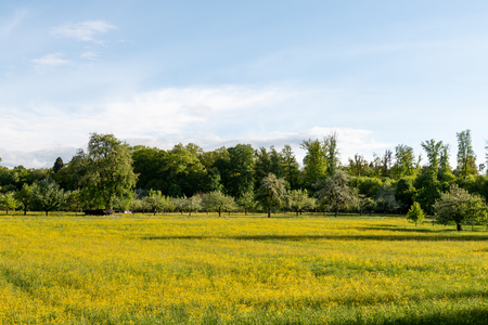 meadow orchards in the late spring time in Germany