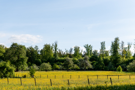 meadow orchards in the late spring time in Germany Reklamní fotografie - 107716450
