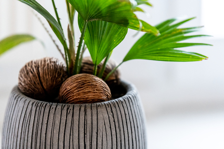 Little palm growing in room with brown decoration in the pot