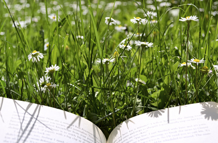 Lying down on a meadow and reading photo