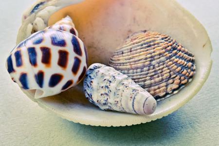 several: Closeup of several decorative seashells and snails