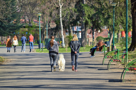 mid afternoon: Two girls walking in the city park with white dog in a sunny day