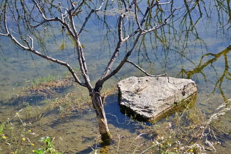 huge tree: Flooded bare tree due to the heavy rains and a huge stone in the puddle Stock Photo
