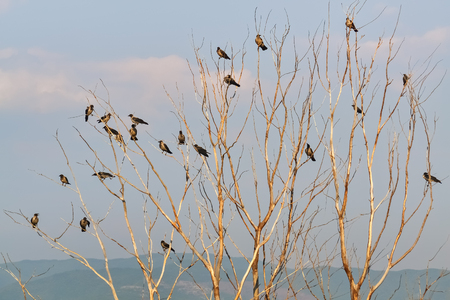 Flock of birds on a bare tree in cold autumn day