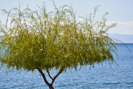 Tree growing by the lake in a peaceful summer morning