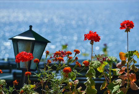 Decorative detail by the sea with red flower and electric lamp