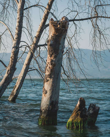 Flooded tree trunks after the heavy rains due to the global climate change