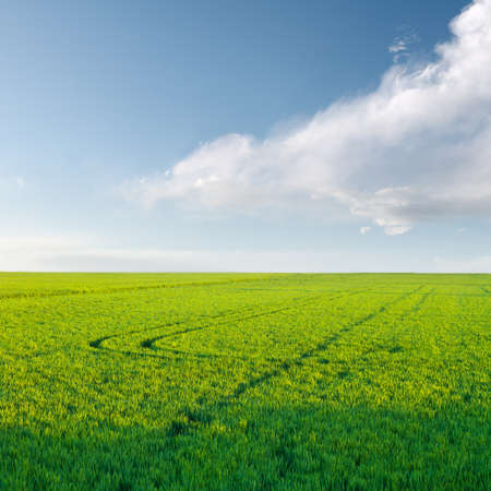 rice crop under clouds sky in Valencia province  Spain  Stock Photo