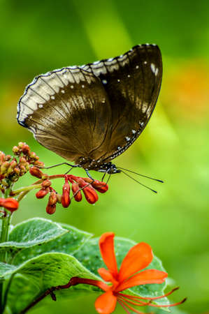 Butterfly sitting on a small orange flower. Stock fotó