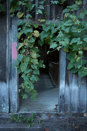 Grungy wooden textures overgown with vines and weeds