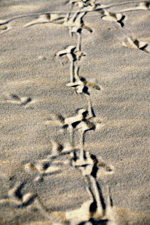 Birds footprint path on sand at the sea. Vertical orientation. Stock Photo - 11873672