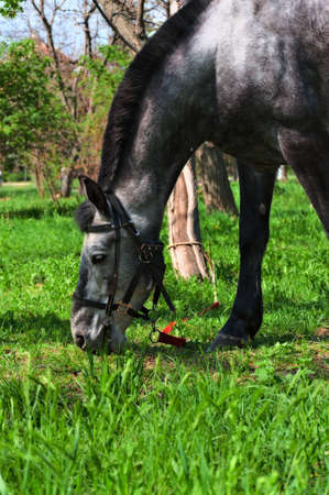 Grazing horse on juicy green grass on a bright sunny day  Stock Photo - 13422315
