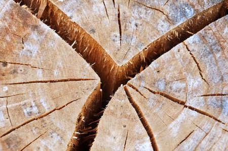 Old cracked tree stump photo