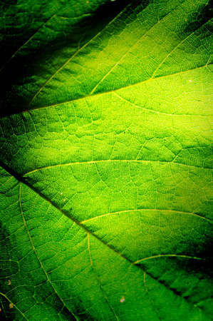 Green leaf background macro texture with space for text or image  photo