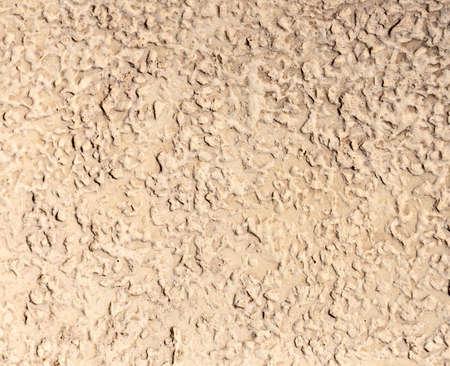 Background - beige stone texture - bark-boring beetle. photo