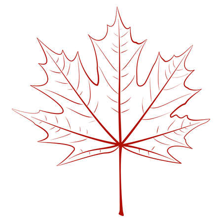 Graphic vector drawing - a maple leaf. EPS10 vector. Stock Vector - 15064133