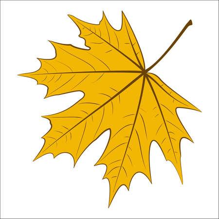 Hand-drawn yellow maple leaf