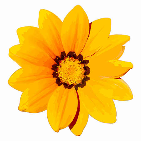 Yellow Flower Head isolated on a white background. EPS10 vector illustration. Illustration