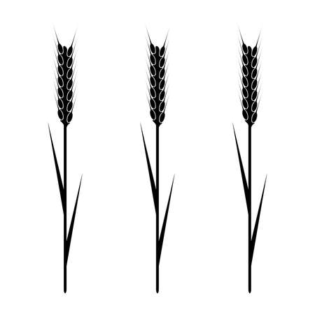 grain field: Design element - wheaten ear. vector. Illustration