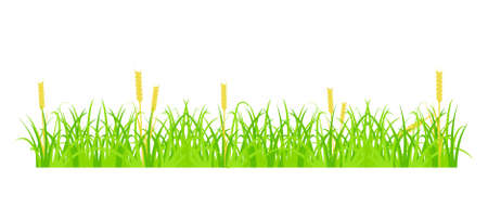 Design element - cartoon green grass with yellow spikelets.  vector Stock Vector - 16762273