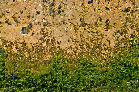 Abstract Grunge Background - concrete with algae  photo